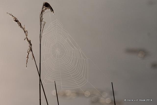 Spinneweb in tegenlicht met mistig sfeertje.