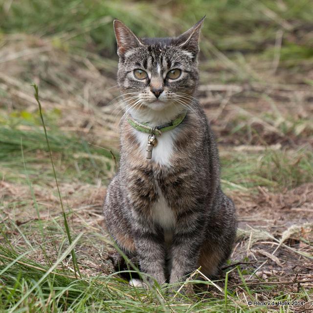 Kat op bezoek.