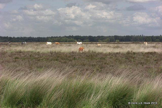 Drenthe.