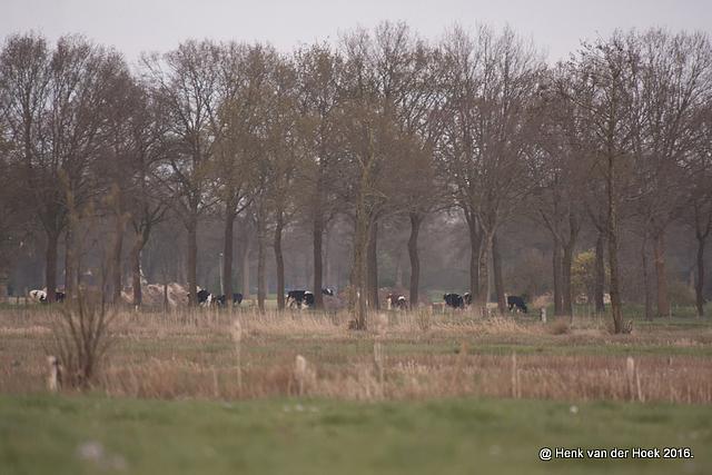 Stukje natuur in Drenthe.