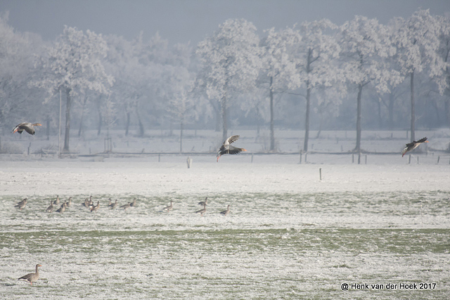 Winter in Drenthe.