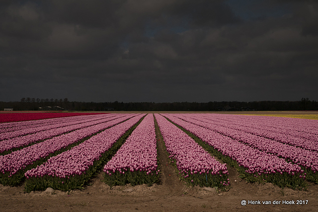 Flevoland.