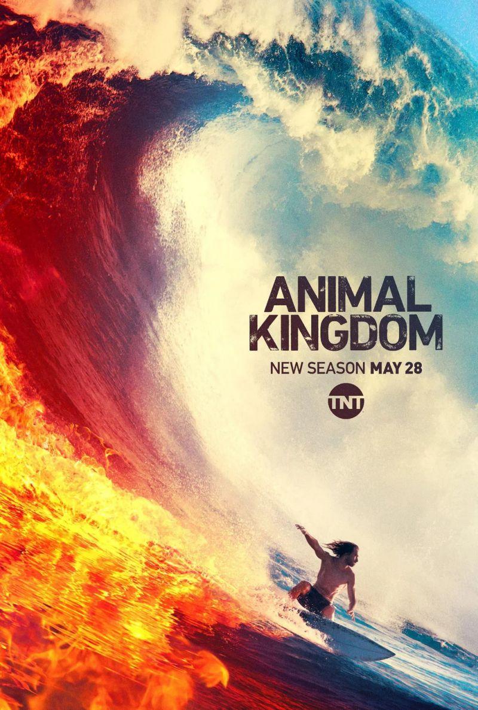 S04 Animal Kingdom